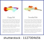 guppy and swordtail fish...   Shutterstock .eps vector #1127304656