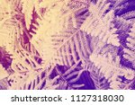 bush ultraviolet retro effect... | Shutterstock . vector #1127318030