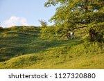 landscape of rural area in...   Shutterstock . vector #1127320880