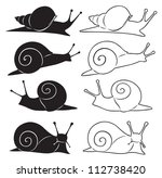 The Figure Shows A Snail