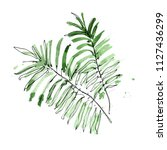 green exotic tropical palm... | Shutterstock . vector #1127436299