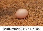 Egg Of Golden Pheasant.