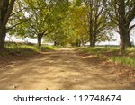 Dirt Road With Avenue Of Trees...