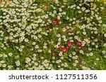 spring flower meadow   Shutterstock . vector #1127511356