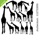 Giraffe Silhouettes Vector