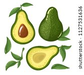 avocado slices  avocado leaves... | Shutterstock .eps vector #1127531636