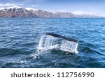 A Humpback Whale's Tail In The...