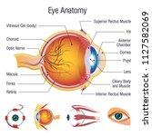 eyeball infographic anatomy... | Shutterstock .eps vector #1127582069