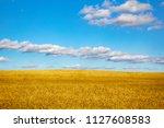 wheat bread.wheat field bright... | Shutterstock . vector #1127608583