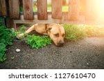 a small wet dog left outside... | Shutterstock . vector #1127610470