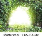 arch creeper plant entrance... | Shutterstock . vector #1127616830