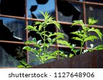 close up view from an old ... | Shutterstock . vector #1127648906