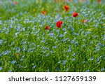 the field of the blossoming flax | Shutterstock . vector #1127659139