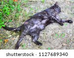 cat is resting on the grass of...   Shutterstock . vector #1127689340