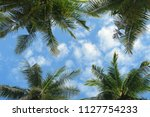 bottom view to palm trees... | Shutterstock . vector #1127754233