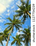 palm trees crowns in blue... | Shutterstock . vector #1127754239