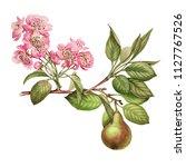 Pear. Pear Blossom. Blossom....