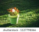 decorative round crackle glass... | Shutterstock . vector #1127798366