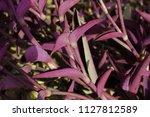 Desert Tropical Flower Called...