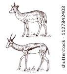 african wild antelope  deer or... | Shutterstock .eps vector #1127842403