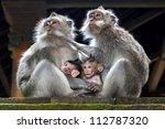 Monkey Family At Sacred Monkey...