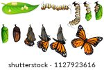 The Butterfly Life Cycle...