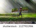 vietnam farmer bearing... | Shutterstock . vector #1127931986