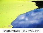 algae or duckweed  floating on... | Shutterstock . vector #1127932544
