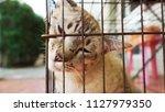 sick cat in cage                ... | Shutterstock . vector #1127979350
