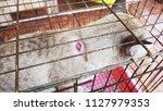 sick cat in cage                ... | Shutterstock . vector #1127979353