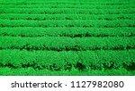 fresh... | Shutterstock . vector #1127982080