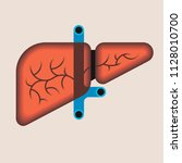 human liver anatomy. medical...   Shutterstock .eps vector #1128010700