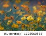 cosmos flowers in the garden ... | Shutterstock . vector #1128060593
