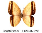 Yellow Butterfly With Brown...
