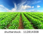 green rows on field and bright...