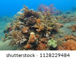 colorful underwater coral reef... | Shutterstock . vector #1128229484