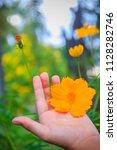 beautiful yellow cosmos flower  ... | Shutterstock . vector #1128282746