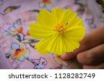 beautiful yellow cosmos flower  ... | Shutterstock . vector #1128282749