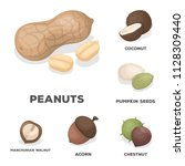 different kinds of nuts cartoon ... | Shutterstock .eps vector #1128309440