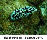 underwater view near apo island ...   Shutterstock . vector #1128350690