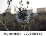 Summer Blossom Thistle