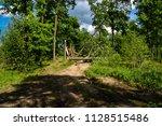 hurricane broken tree on dirt... | Shutterstock . vector #1128515486