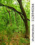 green and dense forest in the... | Shutterstock . vector #1128540266
