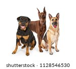 Stock photo three large breed guard dogs on white including rottweiler german shepherd and doberman pinscher 1128546530