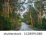 far south coast forests  nsw... | Shutterstock . vector #1128591380