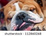 Bulldog Breed Dog Sleeping...