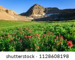 wildflowers in the utah... | Shutterstock . vector #1128608198