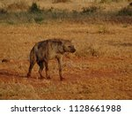 hyena in the dusk | Shutterstock . vector #1128661988