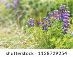 colorful blue and purple wet... | Shutterstock . vector #1128729254