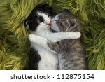Cute Little Kittens Outdoors I...
